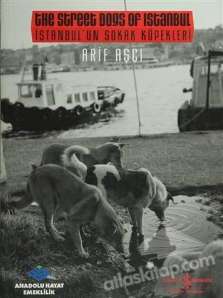 İSTANBUL'UN SOKAK KÖPEKLERİ /  THE STREET DOGS OF ISTANBUL (  )